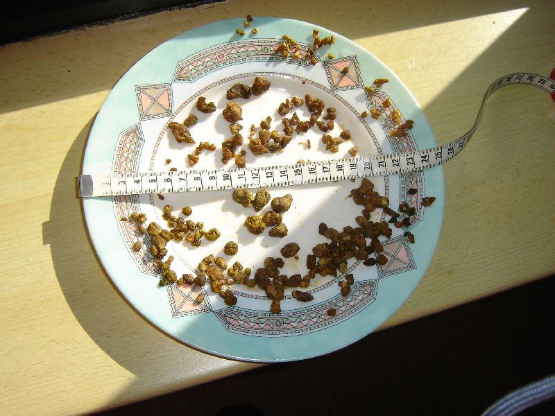 05e_01_05_2011_Liesbet_b_en_Dous_o Foto's leverreiniging - Natuurlijk gezond - Santura