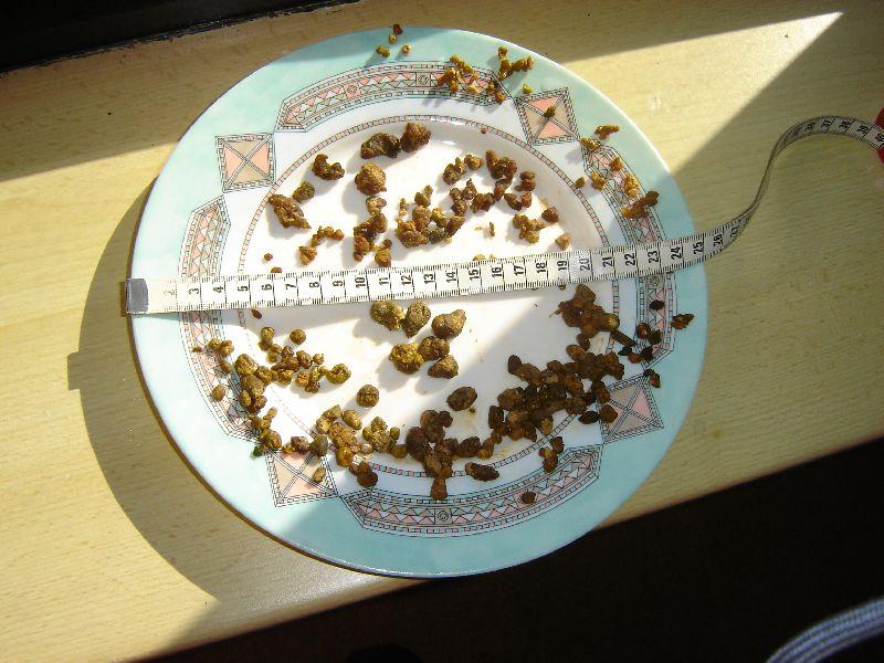 20e_01_05_2011_Liesbet_b_en_Dous_o Foto's leverreiniging - Natuurlijk gezond - Santura